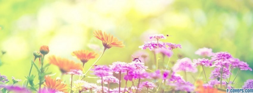 Spring Accommodation Facebook Covers: Looking At The World Through GREEN